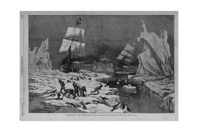 Seal Hunting in the Northern Seas. Drawn by Schell and Hogan, from Sketches by J.W. Hayward. See Pa