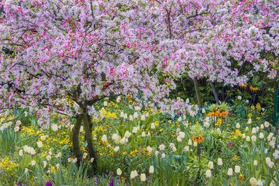 France, Giverny. Springtime in Claude Monet's Garden