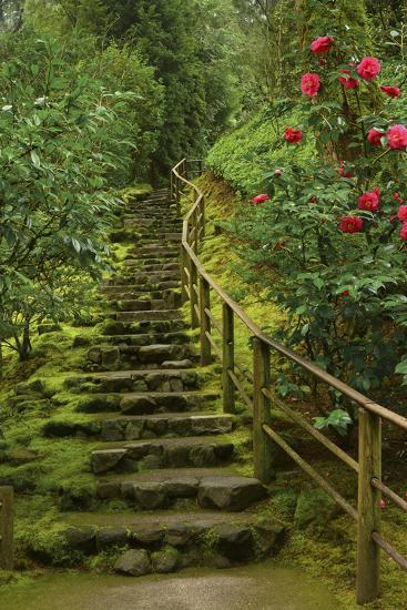 Camellias Steps, Portland Japanese Garden, Portland