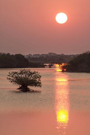 Sunrise, Mangroves and Water, Merritt Island Nwr, Florida