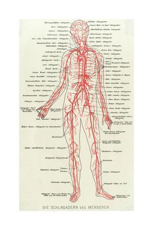 Medical, Anatomy, Blood