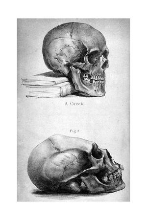 Skulls, 1841
