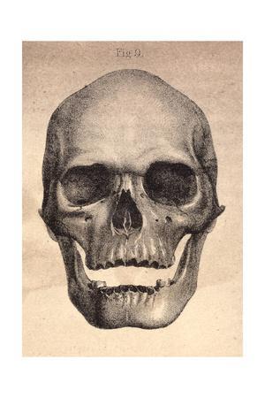 Human Skull, 1841