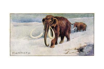 Mammothus Primigenius