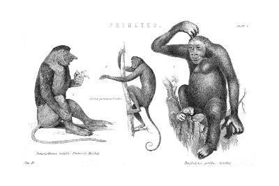 Monkeys and Gorilla