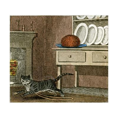 Cat's Run Away 1818