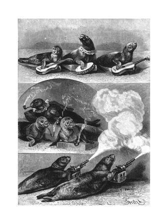 Performing Seals at a Circus, C. 1890