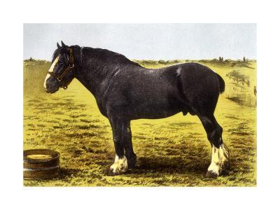 Horse, Grand National 19C