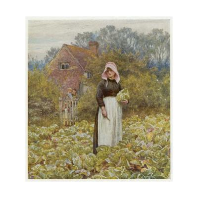 Cutting Cabbages, Allingh