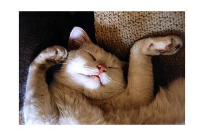 Ritz Fast Asleep