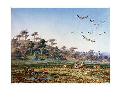 Lions and Dead Quagga
