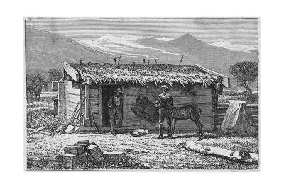 Settlers' Hut, California