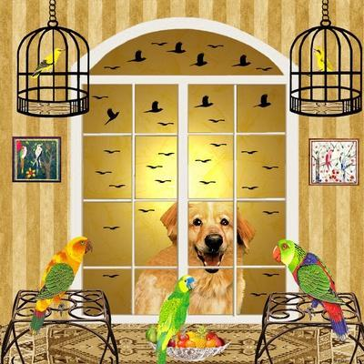 Bird Dogs IV