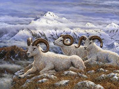 Denali Rams