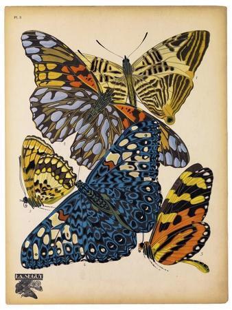 Butterflies Plate 11