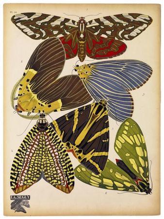 Butterflies Plate 5