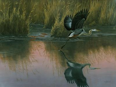 Evening Flight - Great Blue Heron