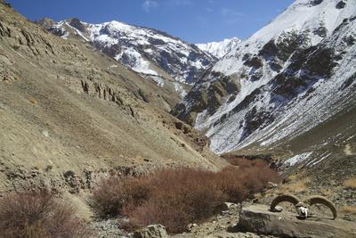Hemis National Park in Winter, Ladakh, India, Asia