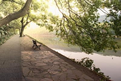 Bench under Tree Canopy at West Lake Shore in Hangzhou, Zhejiang, China, Asia