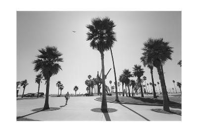 Venice Beach Palm Trees - Los Angeles Beaches