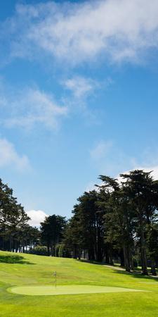Trees in a Golf Course, Presidio Golf Course, San Francisco, California, USA