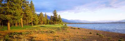 Trees in a Golf Course, Edgewood Tahoe Golf Course, Stateline, Nevada, USA