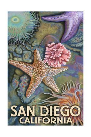 San Diego, California - Tidepool