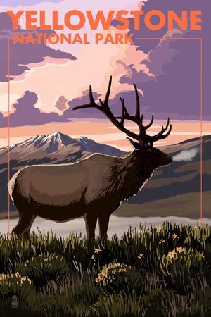 Yellowstone National Park - Elk and Sunset