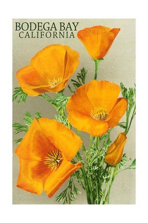 Bodega Bay, California - Poppy