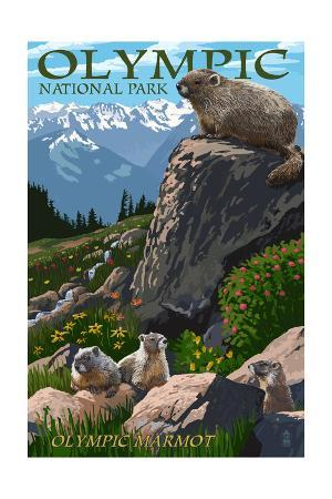 Olympic National Park - Marmots