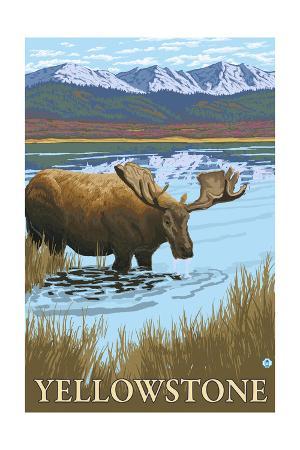 Yellowstone, Montana - Moose Drinking