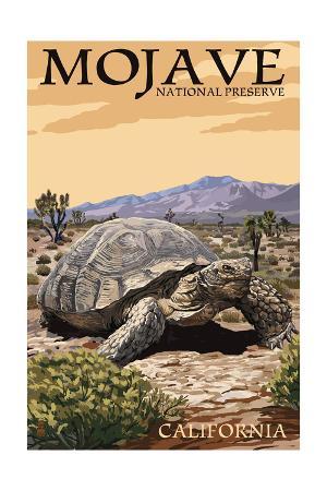 Tortoise - Mojave National Preserve, California