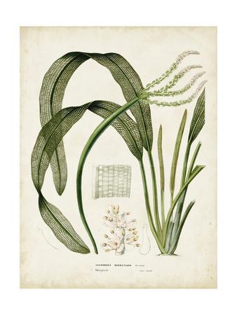 Tropical Grass I