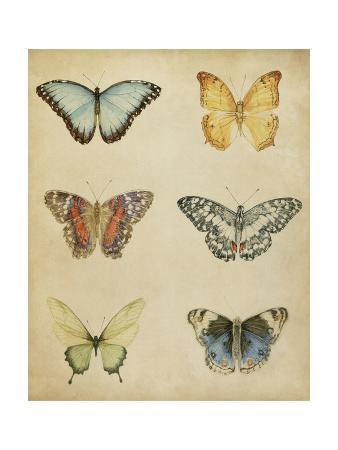 Butterfly Varietal I