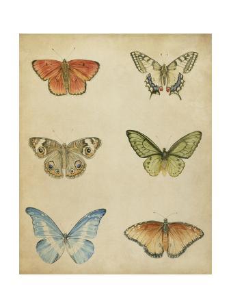 Butterfly Varietal II