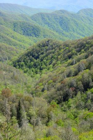 Mid-Elevation View of Mountains and Forest in Springtime