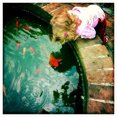A Two Year Old Girl Hangs over the Edge of a Goldfish Pond