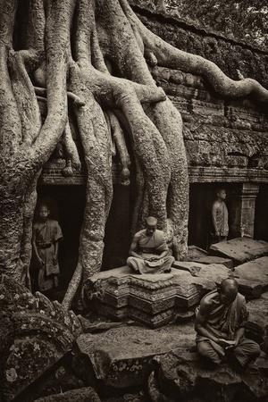 Theraveda Buddhist Monks at the Ta Prohm Temple in the Angkor Complex