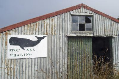 An Anti-Whaling Sign Adorns an Abandoned Shed