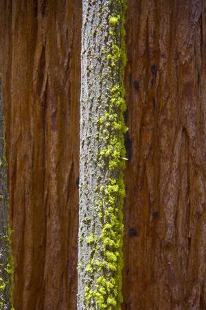 Close Up of a Bright Green Growth on a Tree Trunk