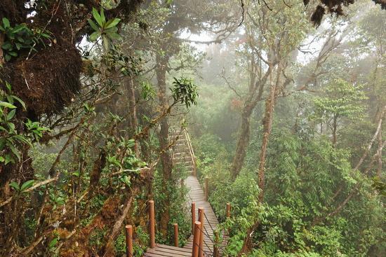 Image result for mossy forest cameron highlands