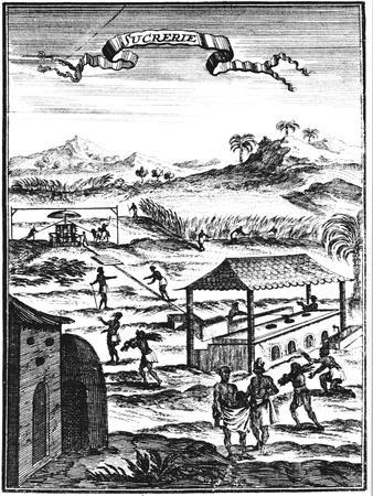 Sugar Factory and Plantation in the West Indies, 1686