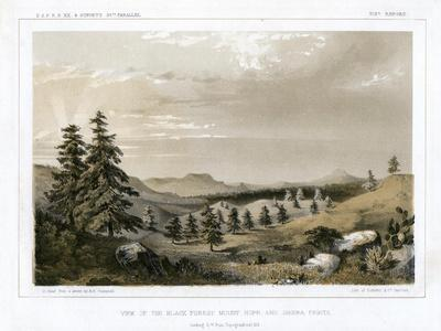 The Black Forest Mount Hope and Sierra Prieta, USA, 1856