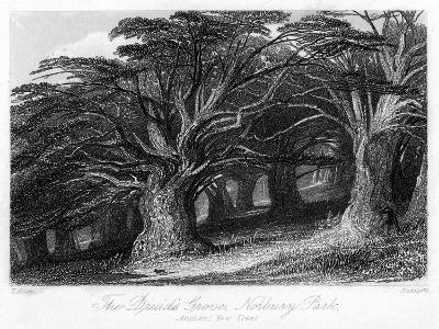 The Druid's Grove, Norbury Park, Surrey, 19th Century