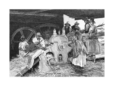 Crushing the Cane, 1886