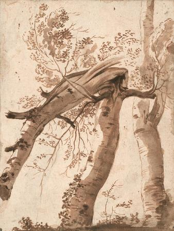 Two Silver Birches, the Front One Fallen, C. 1629