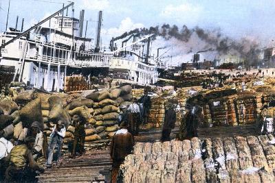 Loading Cotton onto a Ship, Memphis, Tennessee, USA, C1900s