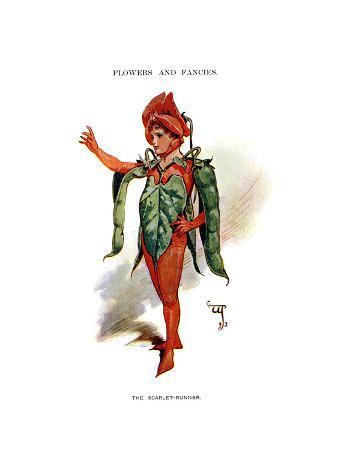 The Scarlet Runner, 1899