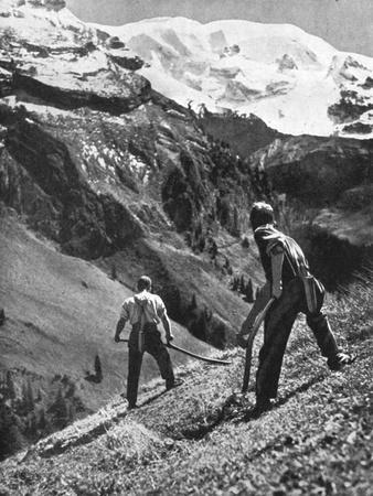 Peasant Farmers Haymaking at the Glacier Foot, Switzerland, 1936
