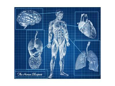 The Human Blueprint Concept
